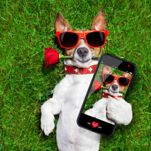 http://www.dreamstime.com/royalty-free-stock-image-valentines-dog-red-rose-his-mouth-taking-selfie-image41924426