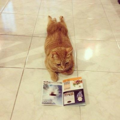 monica ♪'s review of Children's Books: Cool Cats (Perfect