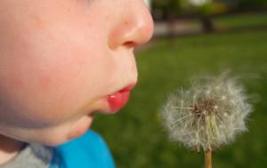 http://www.dreamstime.com/stock-image-child-blows-dandelion-seeds-image2351361
