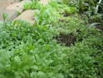 Jessa Slade garden