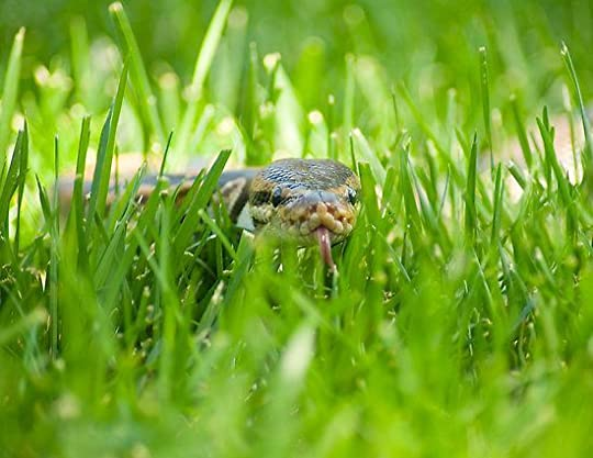 snake in the grass - Google Search