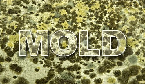 Mold Remediation Services - Mold Removal and Clean Up Washington ...