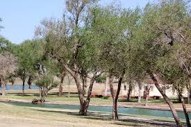 lubbock trees 1