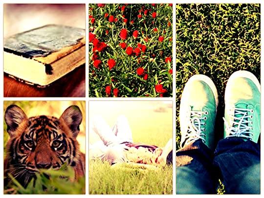 FS collage4
