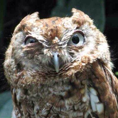 Heiraten am see owl