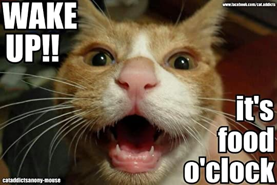 15644617._SX540_ ariele sieling's blog how i feel about dieting a cat meme story,Food Cat Meme