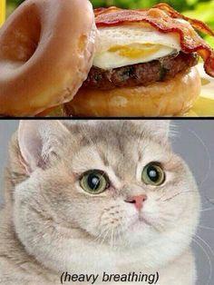 cat-meme-food-bacon-burger-heavy-breathing-cat