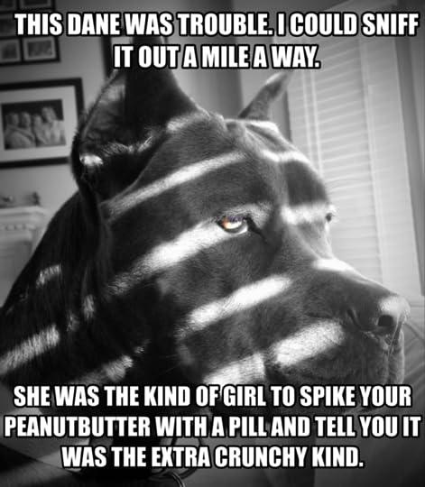noir dog