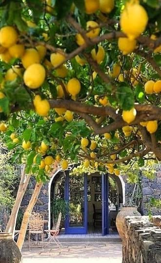 photo lemons.png