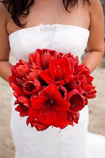 poinsettia bouquet wedding - Google Search