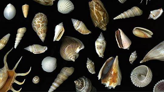 spirals in time the secret life and curious afterlife of seashells