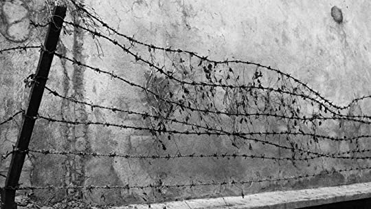 photo Small backs barbed wire_zpsxgm4l9bw.jpg