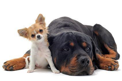 big dog little dog: