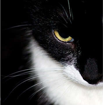 Image result for cat mad black and white
