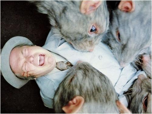 Can Rats Eat Soft Cat Food