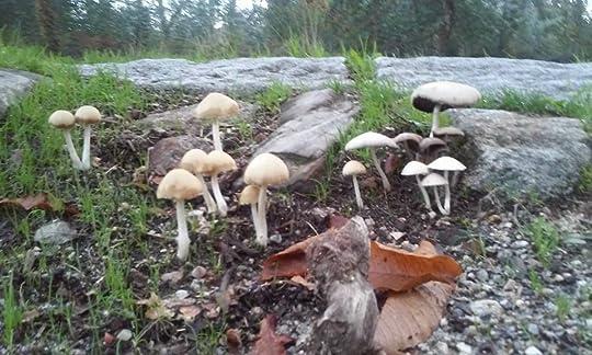 Mushrooms Demystified Pdf