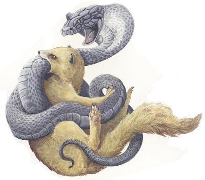 Mongoose vs cobra rikki tikki tavi