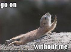 squirrelmeme