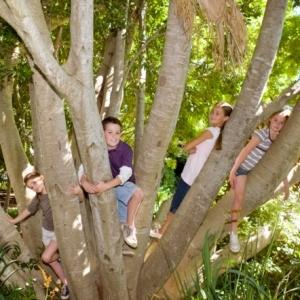 kids.trees