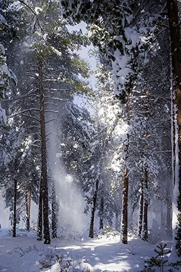 snow storm in the woods: