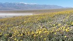 Visit Death Valley to see the predicted super bloom
