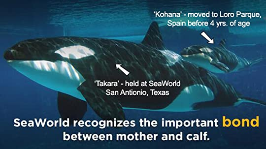 photo SeaWorld-separates-moms-and-calves_zps29qgj9et.jpg