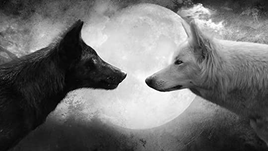 black and white wolves: