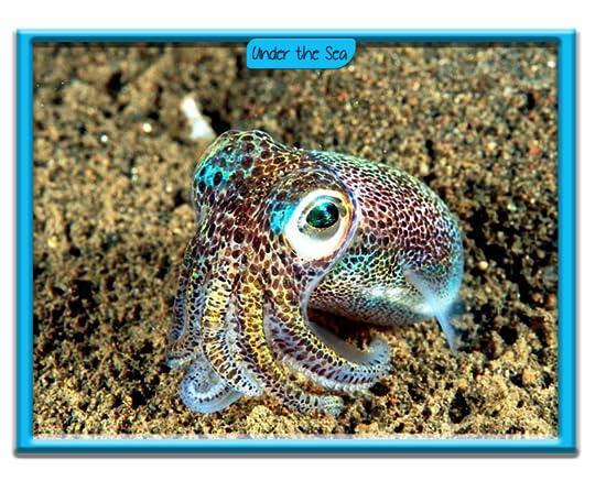 Bobtail Squids