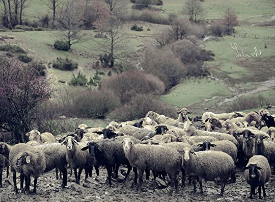 """wild sheep chase essay Give essay a title that reflects the main topic assignment topic: westernisation and un-japaneseness are often regarded as characteristic of murakami harukis fiction discuss """"american"""" elements in a wild sheep chase at micro and macro levels."""
