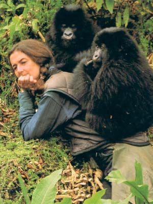 gorillas in the mist book chapter summaries