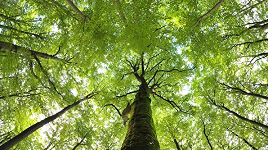 The hidden life of trees what they feel how they communicate agora vou ler o livro de stefano mancuso brilliant green the surprising history and science of plant intelligence e bernd heinrich the trees in my forest fandeluxe Choice Image