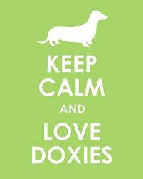photo Keep Calm and love doxies_zpsdehcgwgn.jpg