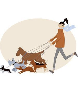 dog walker walking five dogs on leash. Or maybe the five dogs are…: