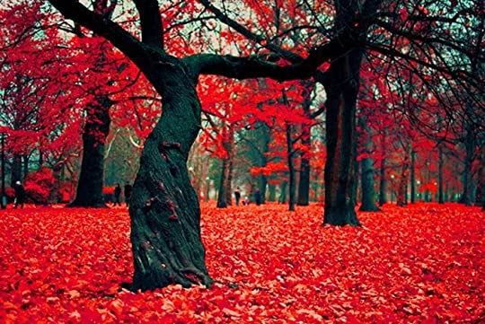 photo red trees_zpsolqiqdgi.jpg