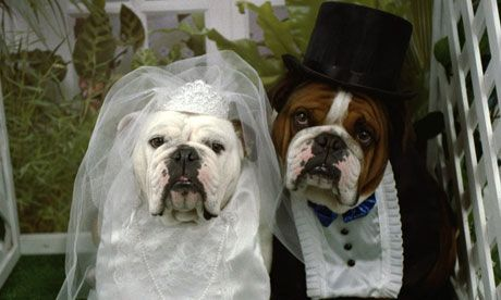 Doggie Wedding: