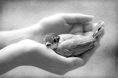vogel in handen