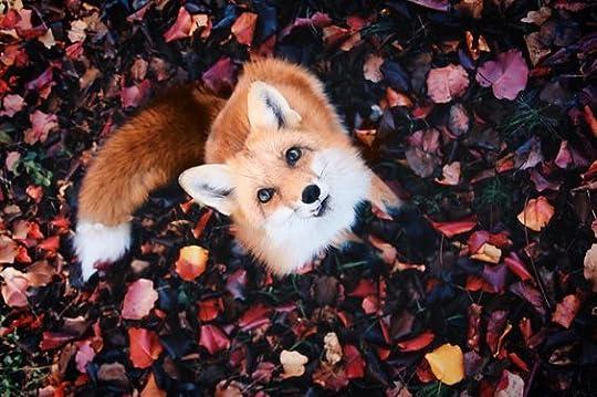 Fall fox: