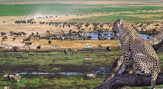photo 6-slide-serengeti-wildlife-safari-migration-pano_zpsc88svoae.jpg