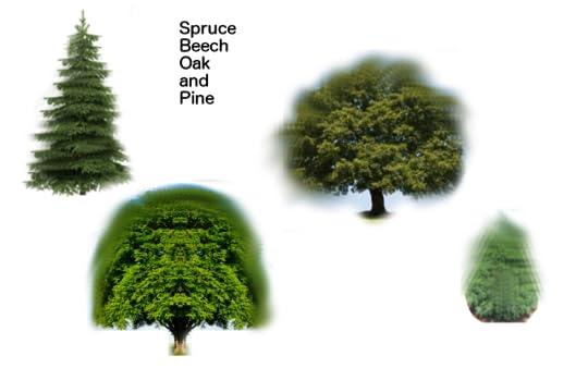 hidden_life_Spruce_Beech_Oak_and_Pine
