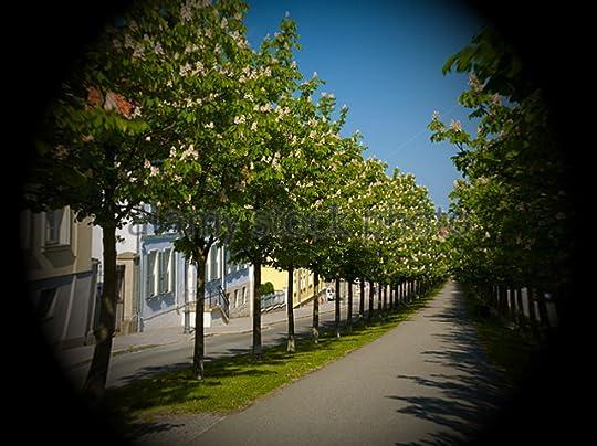 Chestnut tree alley