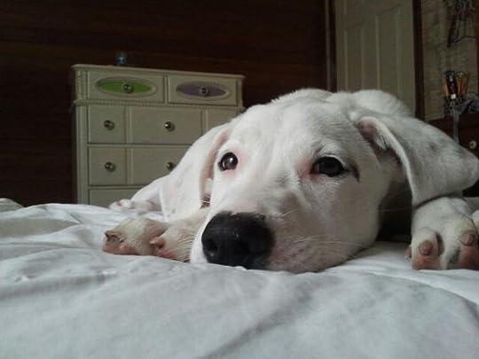 cute puppy face: