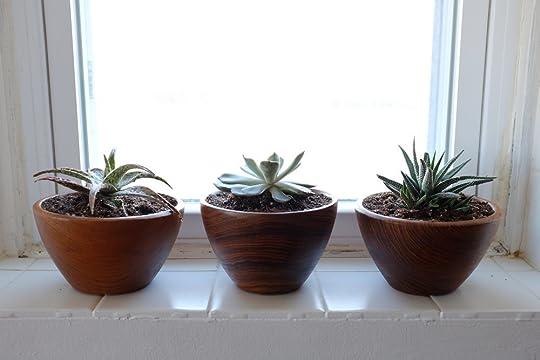 Succulents replanted into teak bowls