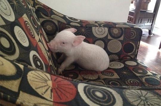 Esther the Wonder Pig by Steve Jenkins