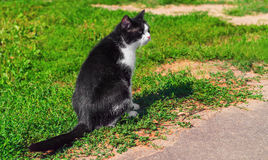 Image result for black and white cat in yard