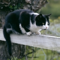 Image result for black and white cat fence
