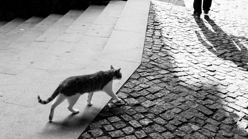 Image result for black and white cat city