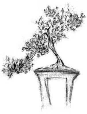 bonsai de robertis carolina zambra alej andro
