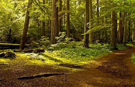 forest: