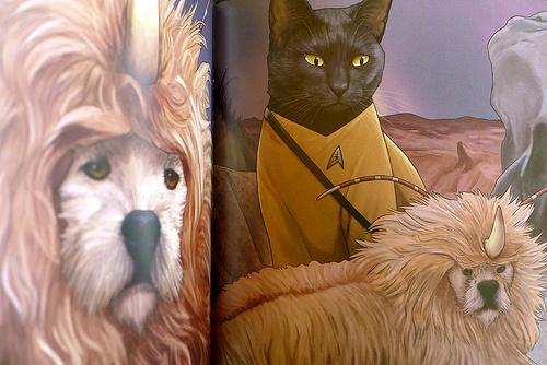 2017-06-14 - Star Trek Cats - 0008 [flickr]