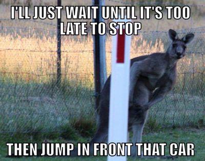 Kangaroo lurking